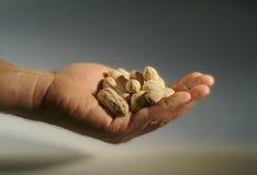 Primo piano di una mano in pieno delle arachidi Immagine Stock