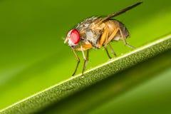 Primo piano di una mosca fotografia stock libera da diritti