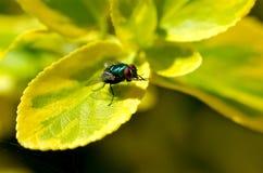 Primo piano di una mosca su una foglia verde Immagini Stock Libere da Diritti