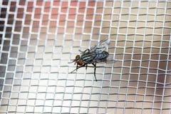 Primo piano di una mosca sulla rete Fotografia Stock