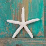 Primo piano di una stella marina e di un fondo di legno del turchese Fotografie Stock