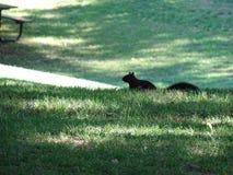 Primo piano di uno scoiattolo Fotografia Stock