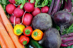 Primo piano di verdure di disposizione del giardino Fotografia Stock