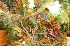 Primo piano esotico dei fiori nel giardino di inverno Immagini Stock