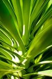 Primo piano esotico verde delle foglie Immagini Stock
