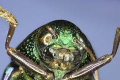 Primo piano estremo dell'insetto immagini stock libere da diritti