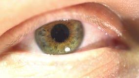 Primo piano estremo dell'occhio verde dell'iride e della pupilla che dilatano e che contrattano Molto con precisione anatomia uma video d archivio