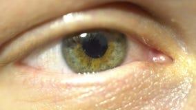 Primo piano estremo dell'occhio verde dell'iride e della pupilla che dilatano e che contrattano Molto con precisione anatomia uma stock footage