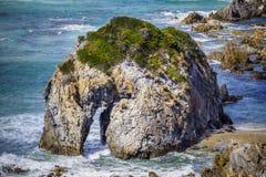Primo piano estremo di formazione rocciosa della testa di cavallo sulla riva in NSW, Australia dell'oceano Immagine Stock