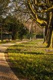 Primo piano europeo degli elementi del parco della bella molla Immagini Stock