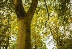 Primo piano europeo degli elementi del parco di bello autunno Immagine Stock Libera da Diritti
