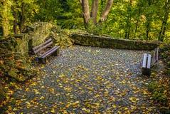 Primo piano europeo degli elementi del parco di bello autunno Immagine Stock