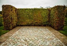 Primo piano europeo degli elementi del parco di bello autunno Fotografia Stock Libera da Diritti