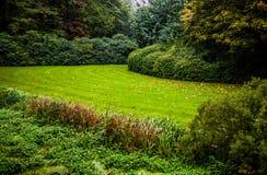 Primo piano europeo degli elementi del parco di bello autunno Immagini Stock Libere da Diritti