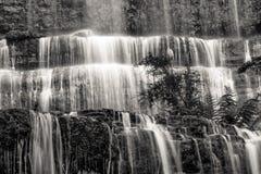 Primo piano famoso di Russel Falls in bianco e nero Giacimento Nati del supporto Immagine Stock