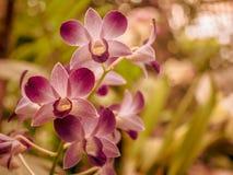 Primo piano fantastico di un'orchidea rossa fotografia stock libera da diritti