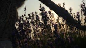 Primo piano fiori di scossa della bambina delle mani delle dita al tramonto video d archivio