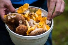 Primo piano foraggiare su un secchio in pieno dei funghi fotografia stock