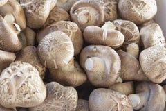 Primo piano fresco dei funghi di shiitake Immagine Stock
