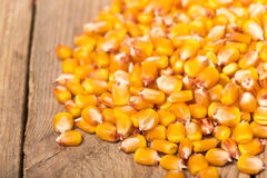 Primo piano fresco del cereale Immagine Stock Libera da Diritti