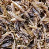 Primo piano fresco del pesce dei pesci piccoli da vendere, vista superiore Fotografie Stock