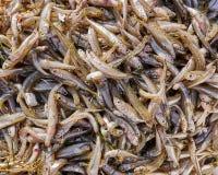 Primo piano fresco del pesce dei pesci piccoli da vendere, vista superiore Immagine Stock