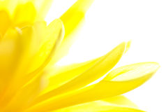 Primo piano giallo astratto del fiore Fotografia Stock Libera da Diritti
