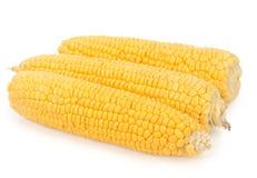 Primo piano giallo del cereale Fotografia Stock
