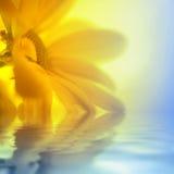 Primo piano giallo della margherita fotografia stock