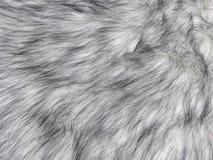 Primo piano grigio chiaro naturale di struttura della pelliccia del visone per fondo immagini stock
