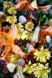 Primo piano guasto del fiore Fotografie Stock