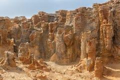 Primo piano insolito di formazioni rocciose alla foresta Petrified, capo Bridgewater, Australia fotografia stock libera da diritti