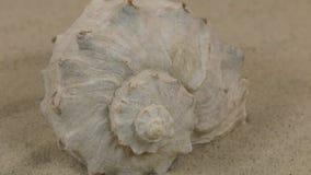 Primo piano, la rotazione della conchiglia che si trova sulle dune di sabbia video d archivio