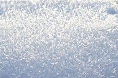 Primo piano lanuginoso della neve Fotografia Stock