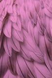 Primo piano lanuginoso rosa della piuma Fotografia Stock Libera da Diritti