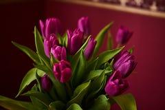 Primo piano lilla non aperto del germoglio del tulipano La Russia, Mosca, festa, regalo, umore, natura, fiore, pianta, mazzo, mac Fotografia Stock Libera da Diritti