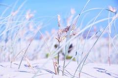 Primo piano lungo dell'erba selvatica del fondo astratto, del cielo blu, della sabbia, dell'oceano e della spuma Fotografia Stock Libera da Diritti