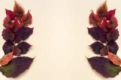 Primo piano marrone-rosso di autunno delle foglie su un fondo bianco fotografie stock libere da diritti