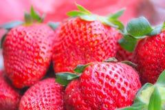 Primo piano maturo delle fragole Fondo delle fragole succose Immagini Stock