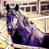 Primo piano nero del cavallo Fotografie Stock