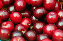 Primo piano organico delle ciliege di agricoltura Fotografia Stock