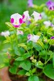 Fiore poco fiore Fotografie Stock