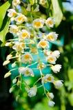 Piccolo fiore dell'orchidea in natura Fotografia Stock