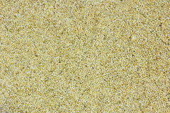 Primo piano pieno del blocco per grafici del seme del granulo del sesamo Fotografia Stock Libera da Diritti