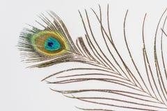 Primo piano, piuma del pavone disposta su una tavola bianca Fotografia Stock