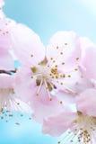 Alta macro rosa chiave del petalo Immagine Stock Libera da Diritti
