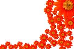 Primo piano rosso del fiore Immagine Stock