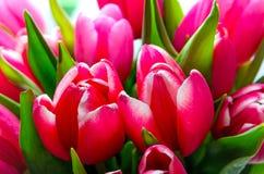 Primo piano rosso del mazzo dei tulipani Fotografia Stock Libera da Diritti
