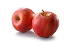 Primo piano rosso delle mele isolato su bianco Fotografia Stock Libera da Diritti