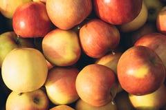 Primo piano rosso e giallo di recente selezionato delle mele Fotografia Stock Libera da Diritti